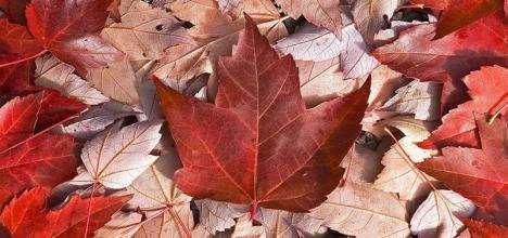 加拿大公立高中申请流程